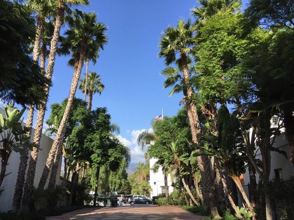 Downtown Santa Barabara hat viele Palmen und spanische Architektur