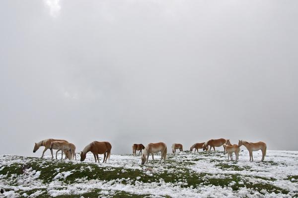 Wir fanden auf dem Gipfelplateau verblüfft eine Herde wilder Pferde