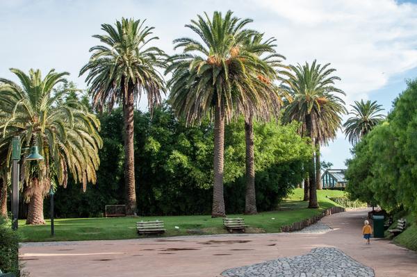 Palmen und Klara im Zoo in Benavidez