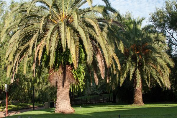 Mehr Palmen im Zoo in Benavidez