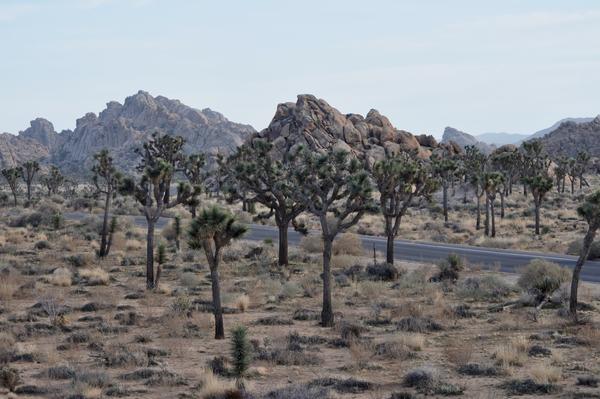 Wüstenlandschaft 4