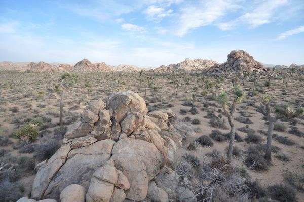Wüstenlandschaft 1