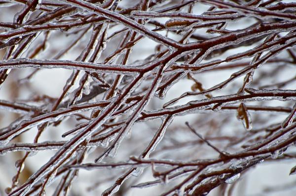 Dicke Eisschicht über den Bäumen