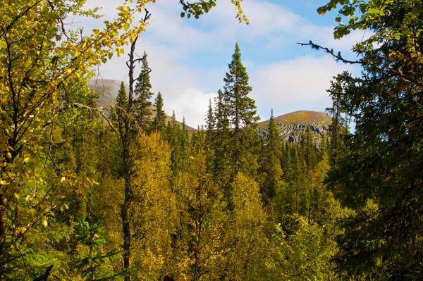 Arktischer Nadelwald gibt den Blick auf den Huornnásj frei