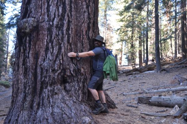 Sequoias sind ganz schön groß
