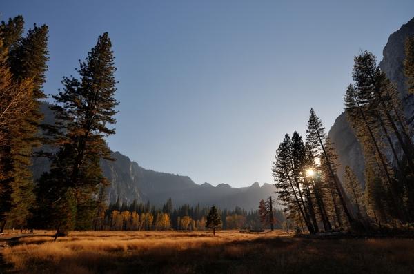 Sonne hinter Bäumen