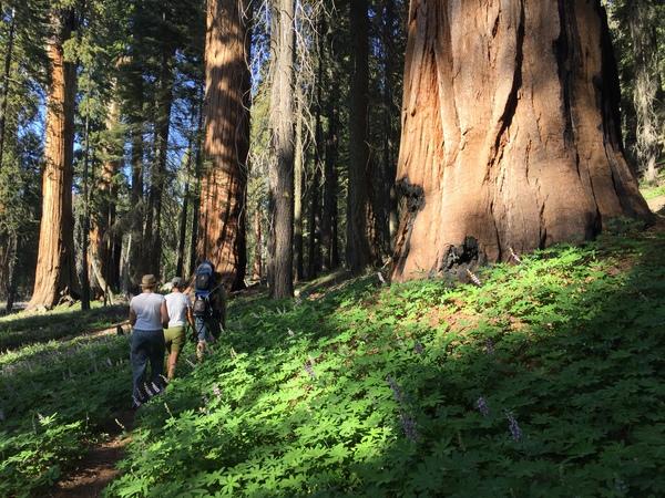Auf dem Alta Trail waren wir alleine