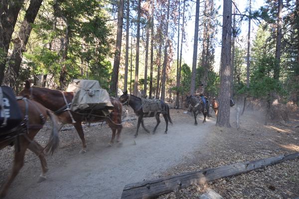 Lastpferde auf dem Weg durch dem Canyon